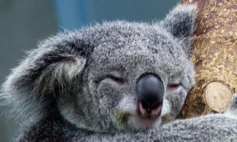 Discover...<br/>Australia